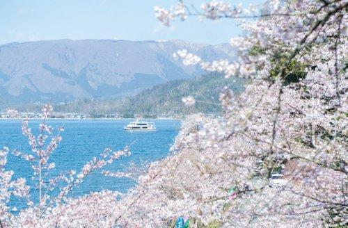 高速船と海津大崎の桜