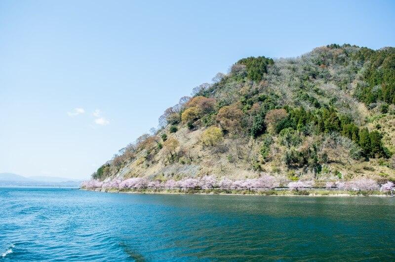 湖上から見た海津大崎の桜並木