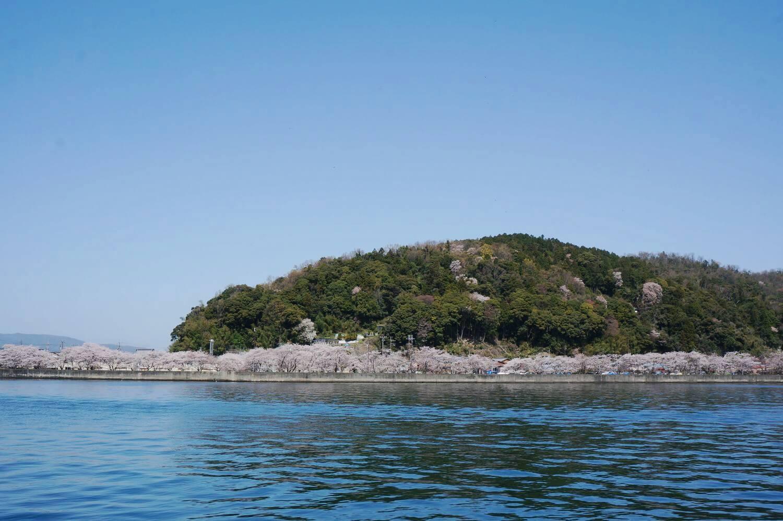 沖島の桜並木